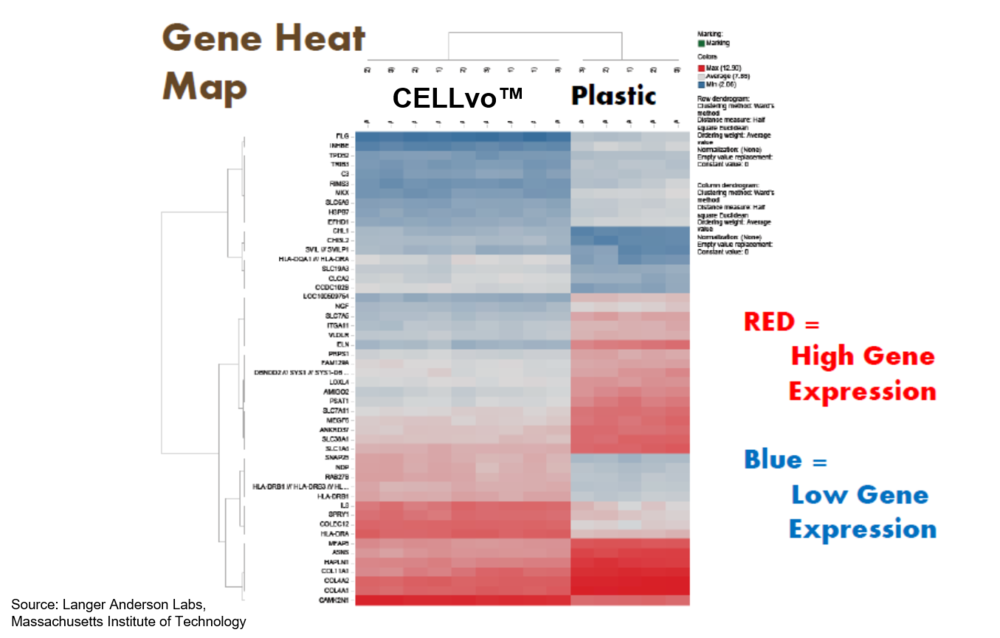 Heat map of gene expression of cells after seeding onto TCP vs. CELLvo™ Matrix. Seeding onto simple substrates results in a shift in gene expression toward matrisome proteins they aren't seeing.