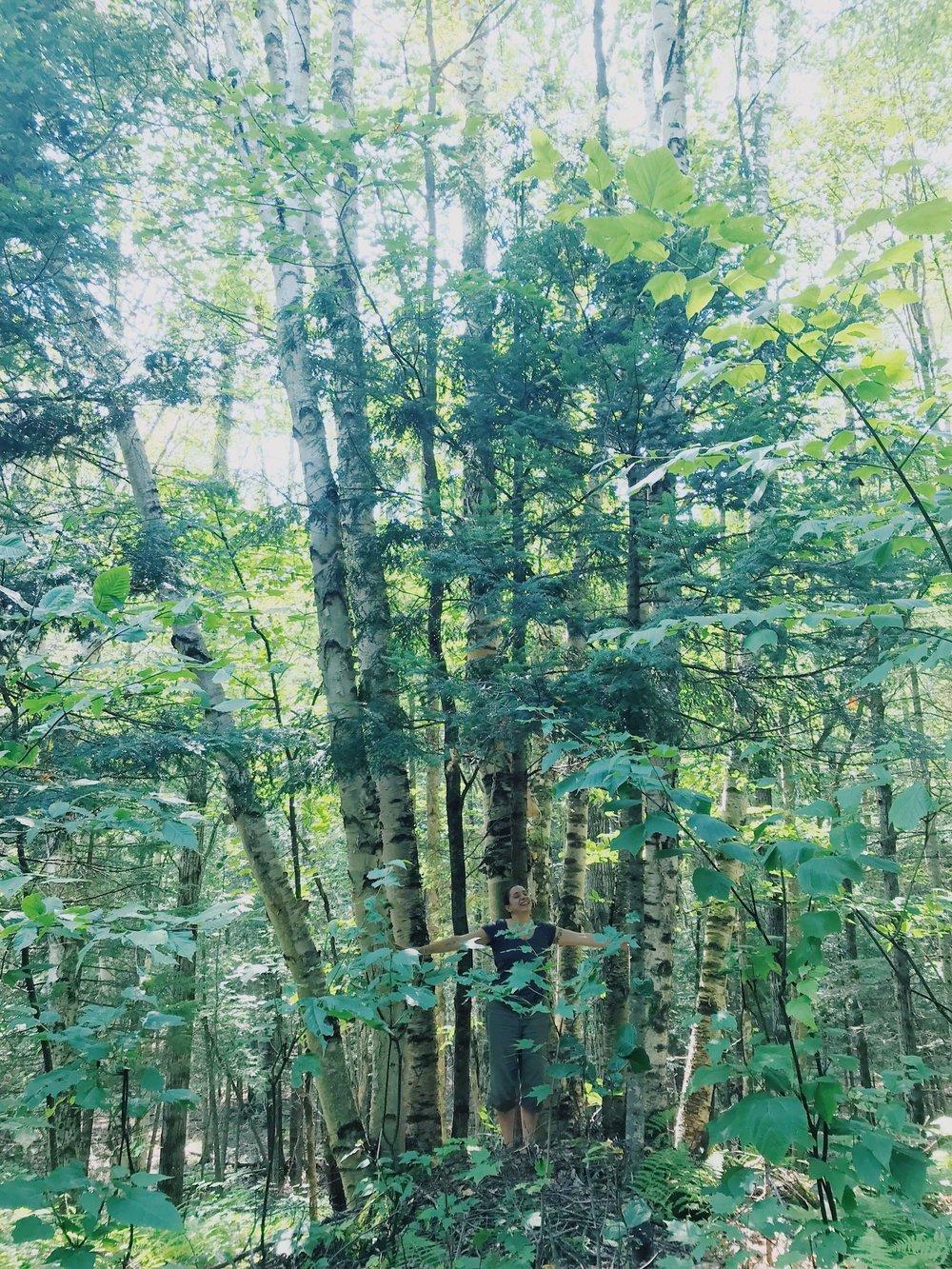 Cours offerts pour 2019 :    Bain de forêt    Herbo    Guérison femmes