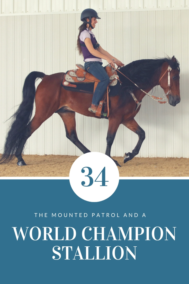 Meet The Mounted Patrol Ride A World Champion Stallion Discoverthehorse