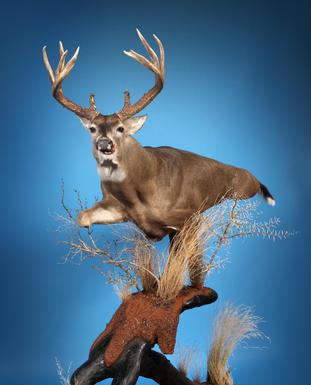 """""""Fair Chase""""James Newport 2018 - James' 2018 competition piece earns several awards.Texas State ChampionOklahoma State ChampionLouisiana State ChampionUnited Taxidermy Whitetail ChampionWasco Award - BestAritsan AwardPeople's Choice"""