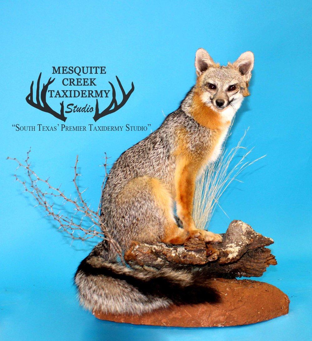 Fox South Texas Habitat.jpg