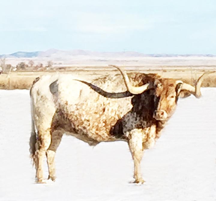 lucky bull emali.jpg