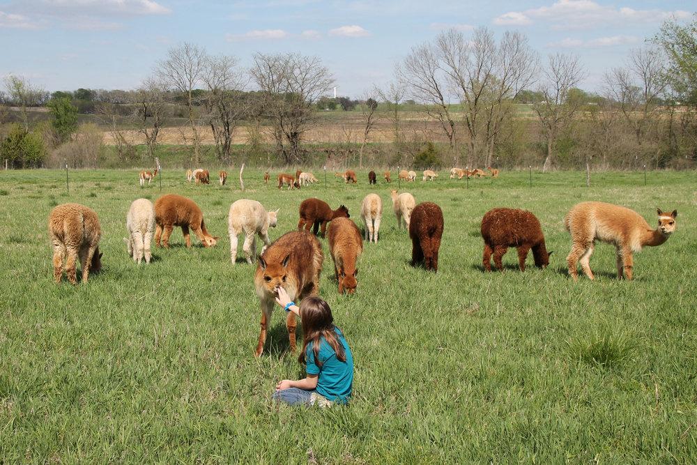 farm-to-fiber-image.jpg
