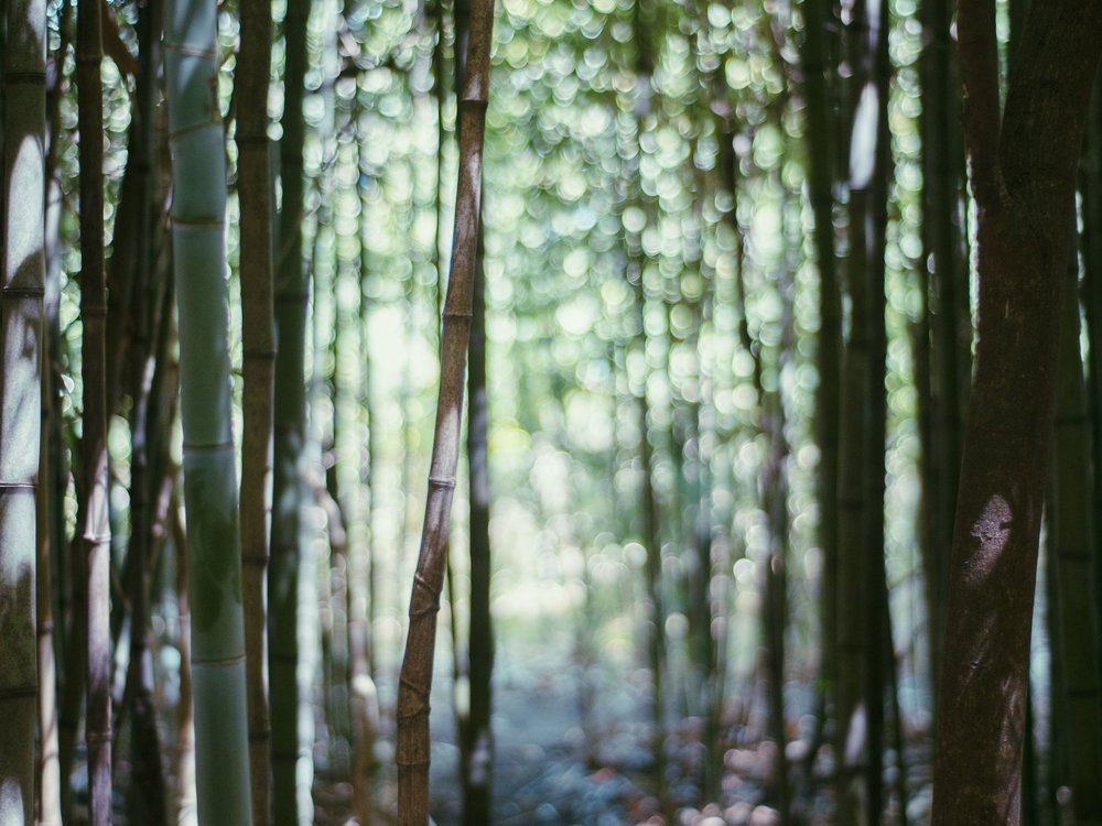 bamboo- light.jpg