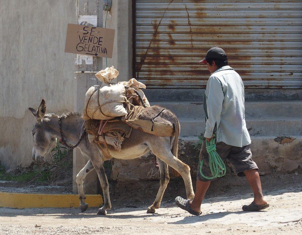 yonder_horse_oaxaca-1.JPG