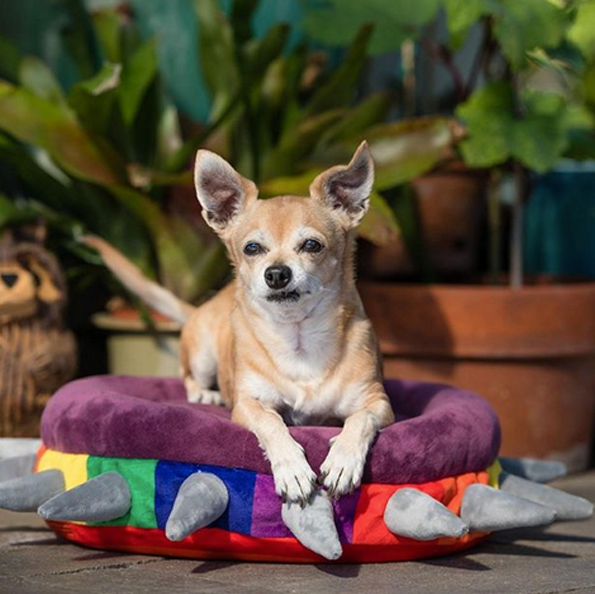 @ petplaysf  — SPIKED! by P.L.A.Y. Rainbow Pet Bed