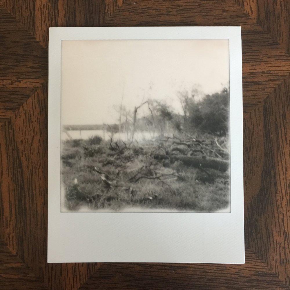 Shoreline I, 2017