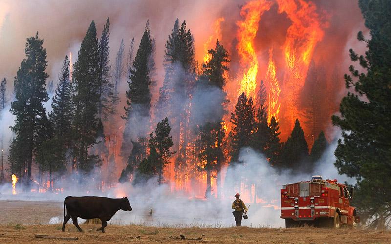 Forest-Inferno-Don-Bartletti.jpg