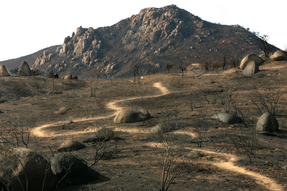 Trail of Tribulation