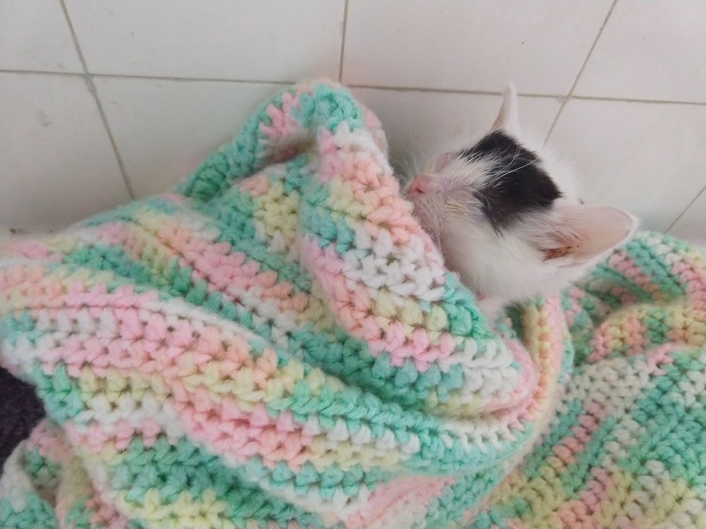 Suki the tiny kitten saves money by choosing only modest lodging accommodations.