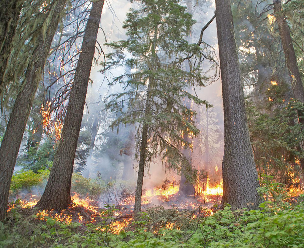 Wildfire - Lightning has sparked forest fires for millions of years. People have struggled to exclude fire for 100 years. The two processes are at odds and people need to use fire, or emulate its effects, to rebuild the forests.