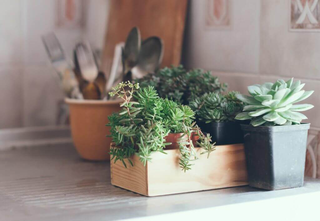 5-fall-essentials-that-every-interior-designer-will-love-succulents