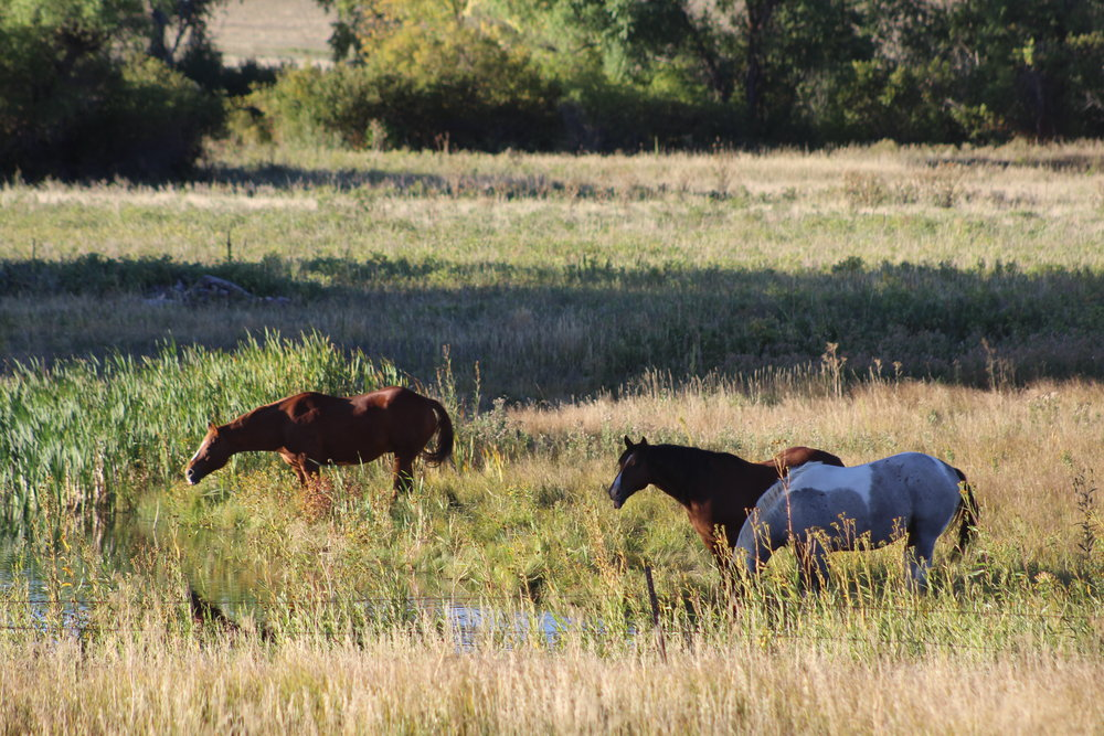 About Pine Cliff Ranch - Find out about the ranch and its conservation.
