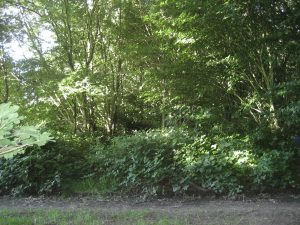 Woodland edge prior to thnning