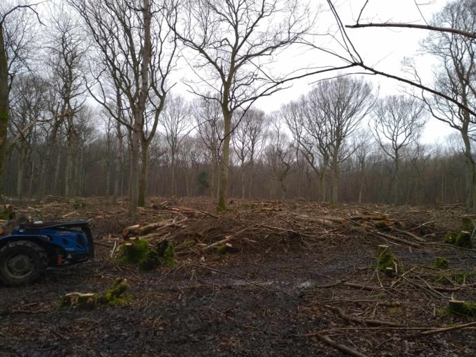 Coppice plot after felling smaller stems to leave some standards.