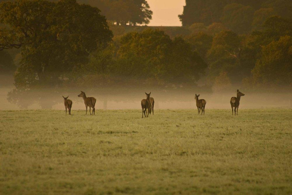 Herd_Of_Deer.jpg