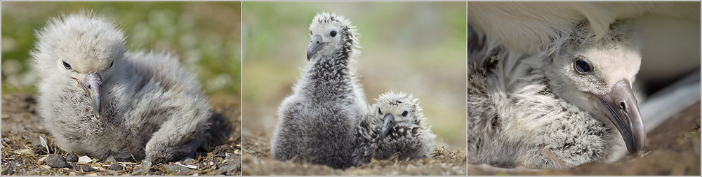 albatross.jpg