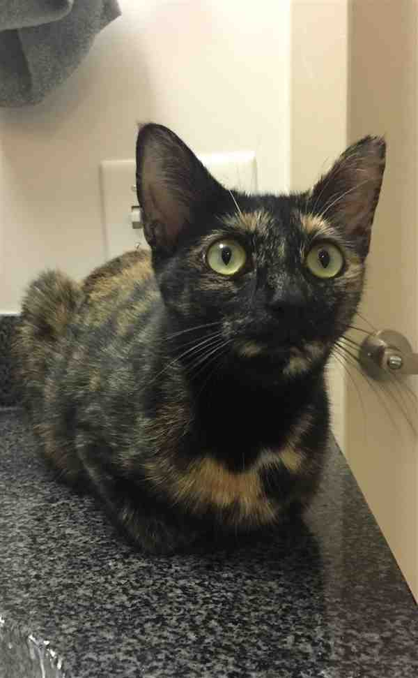 meet gabrielle wake county animal center in foster cat