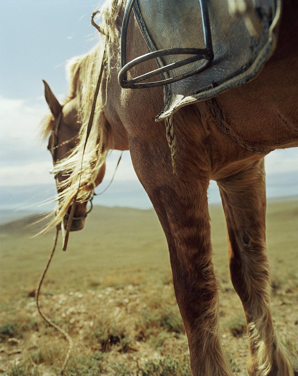 Mongolia_summer01_29_17_lighter.jpg