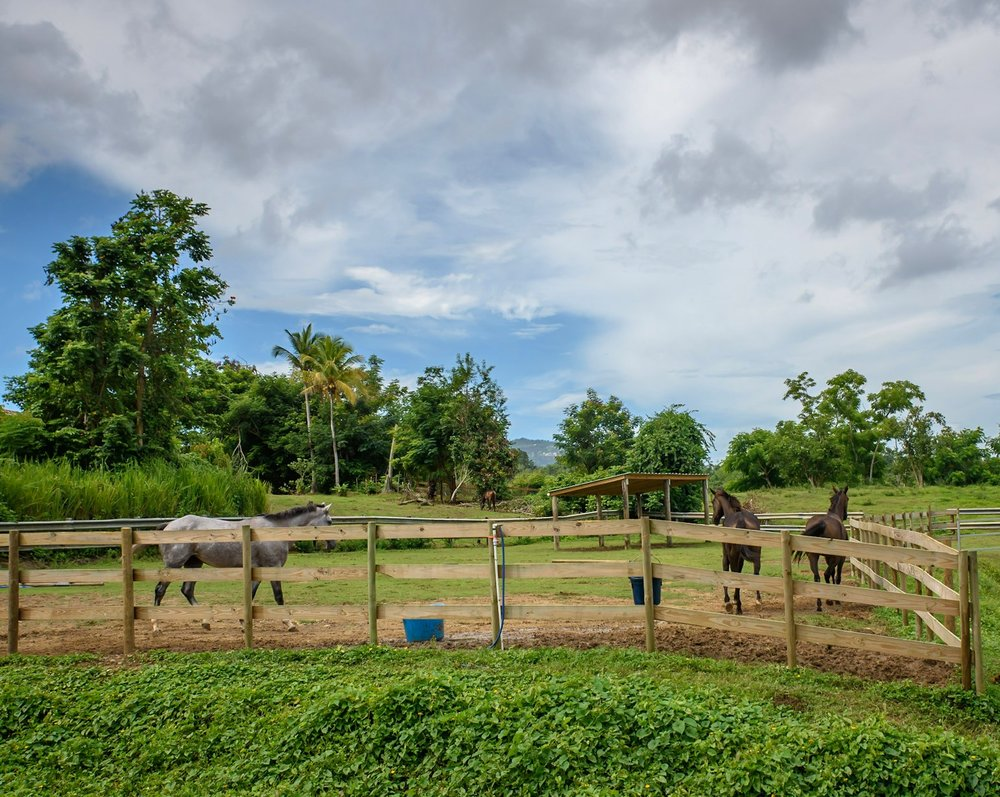 We are immensely grateful for our sponsors - We could not exist without the generous and kind support of our sponsors. Caring for horses can be costly and demanding.Due to our remote island location, logistics are more difficult and costs are considerably higher - adding to the complexity of re-homing these amazing horses.