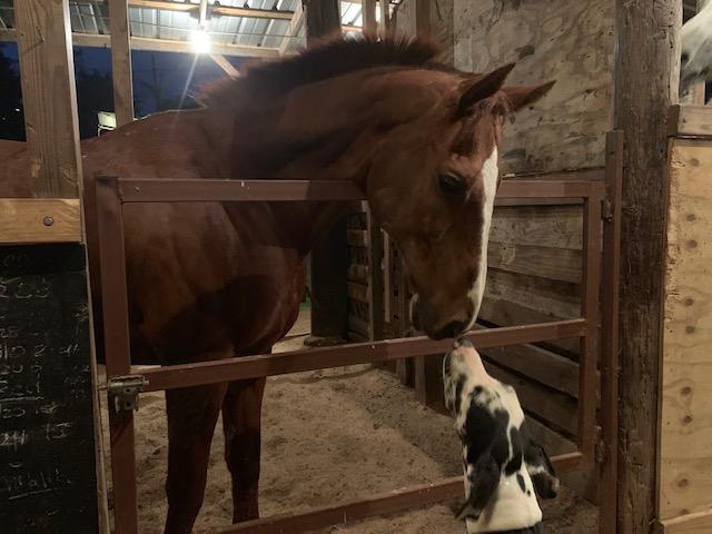 Horn Buckle at CTA Farm - 12.28.18 (2).jpg