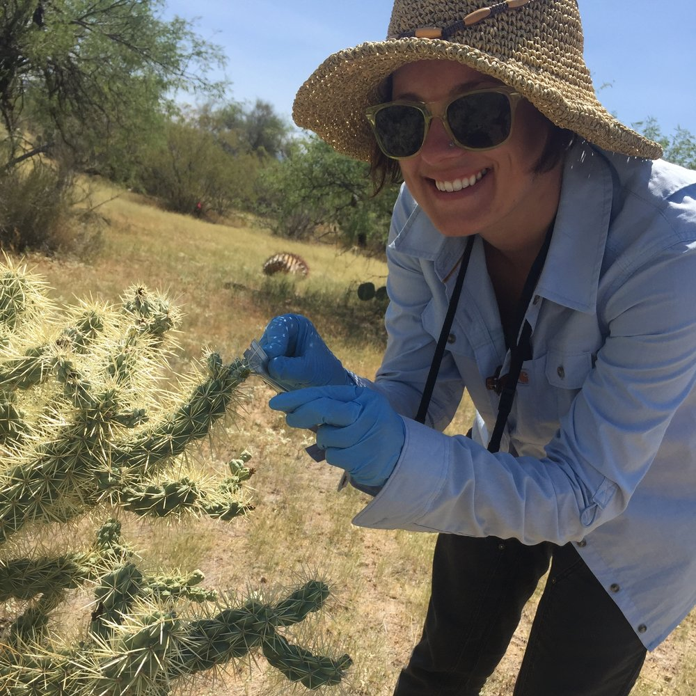 Sampling RNA in the Sonoran Desert -