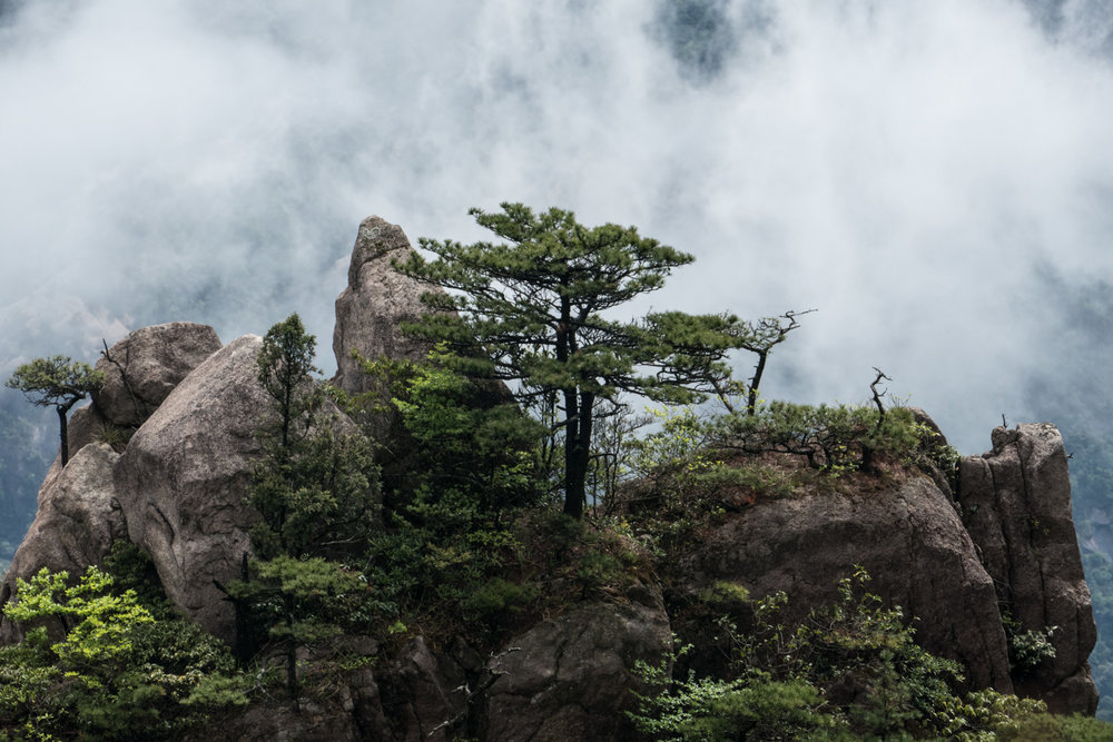 Rocks and pine trees in cloud