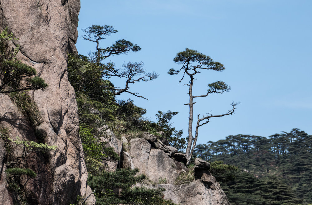 Trees growing in rock