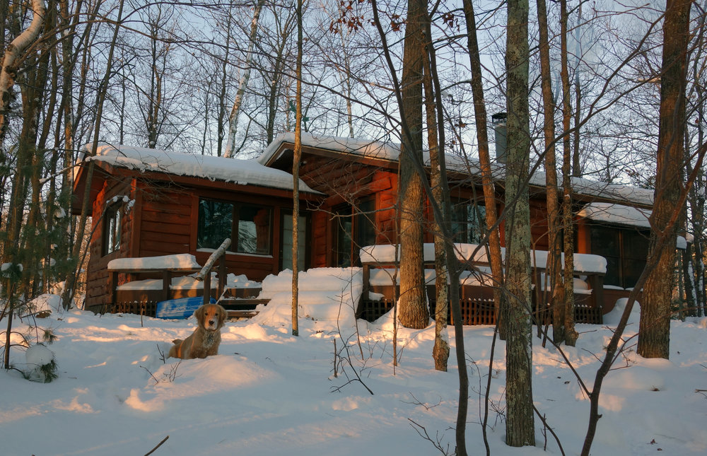 Maple and our cabin in the winter
