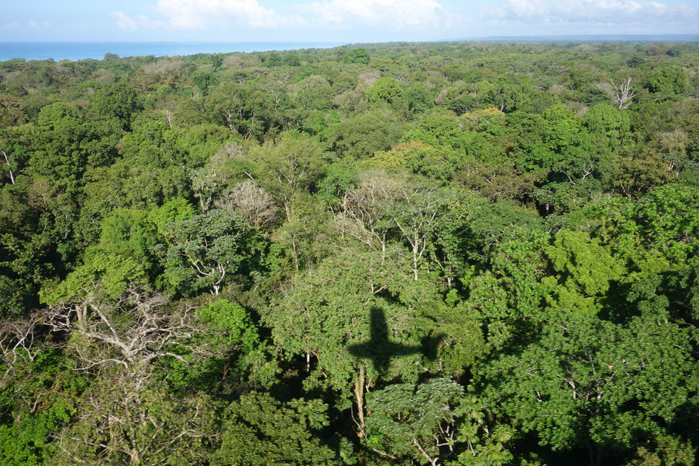 View of the rainforest from the plane