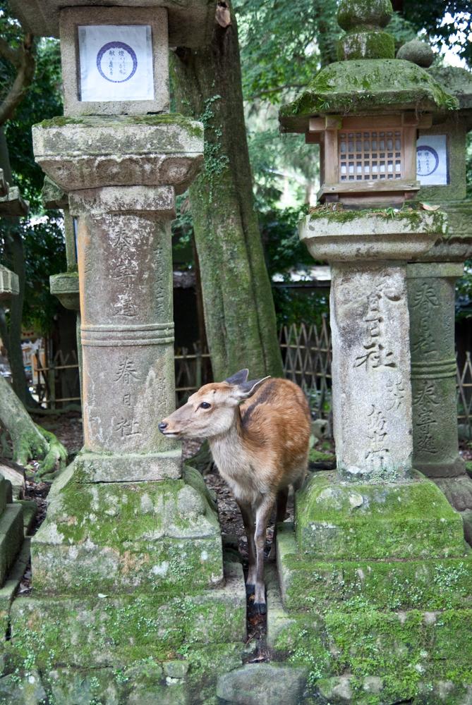 Deer and lanterns