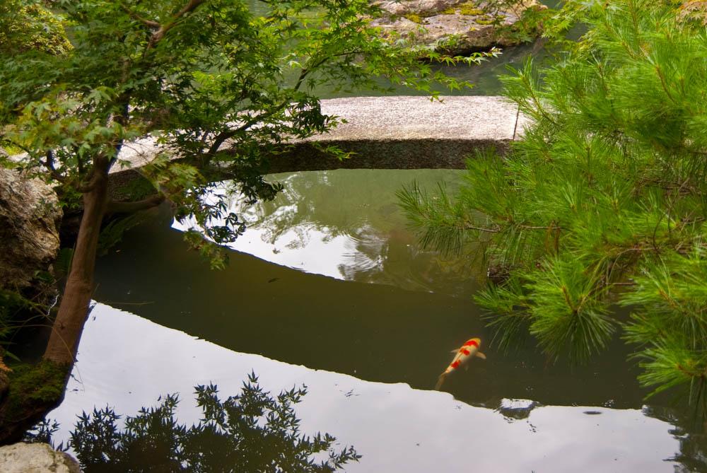 Goldfish and garden in the Shoren-in temple