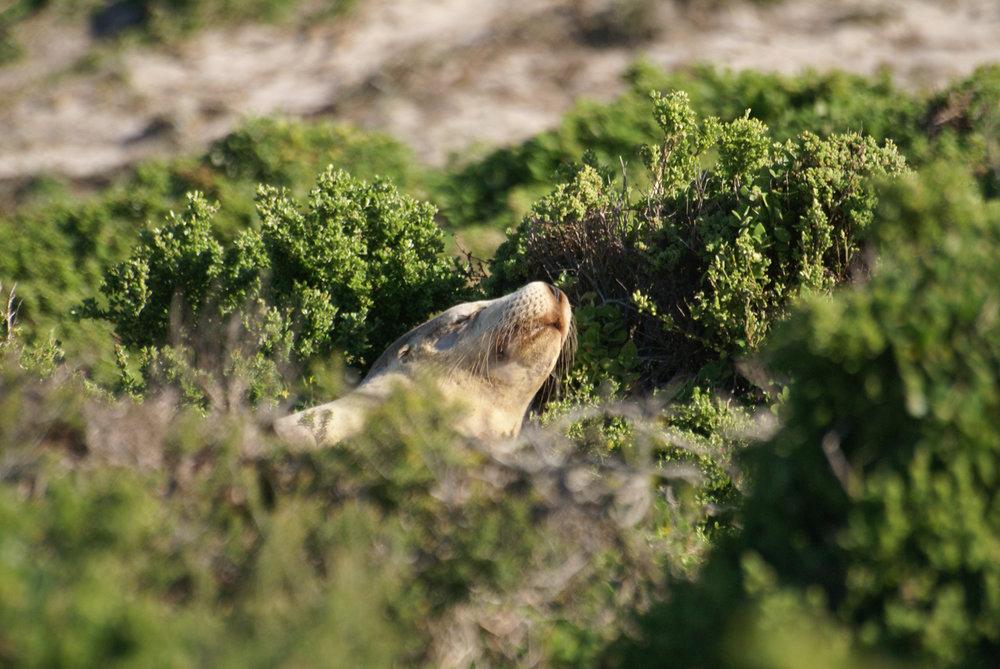 At Seal Bay