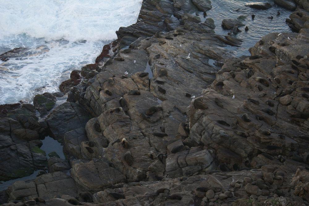 Fur seal colony near Admiral's arch