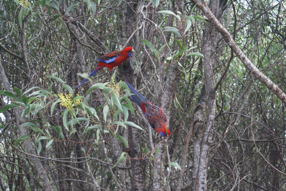 In Flinder's Chase National Park