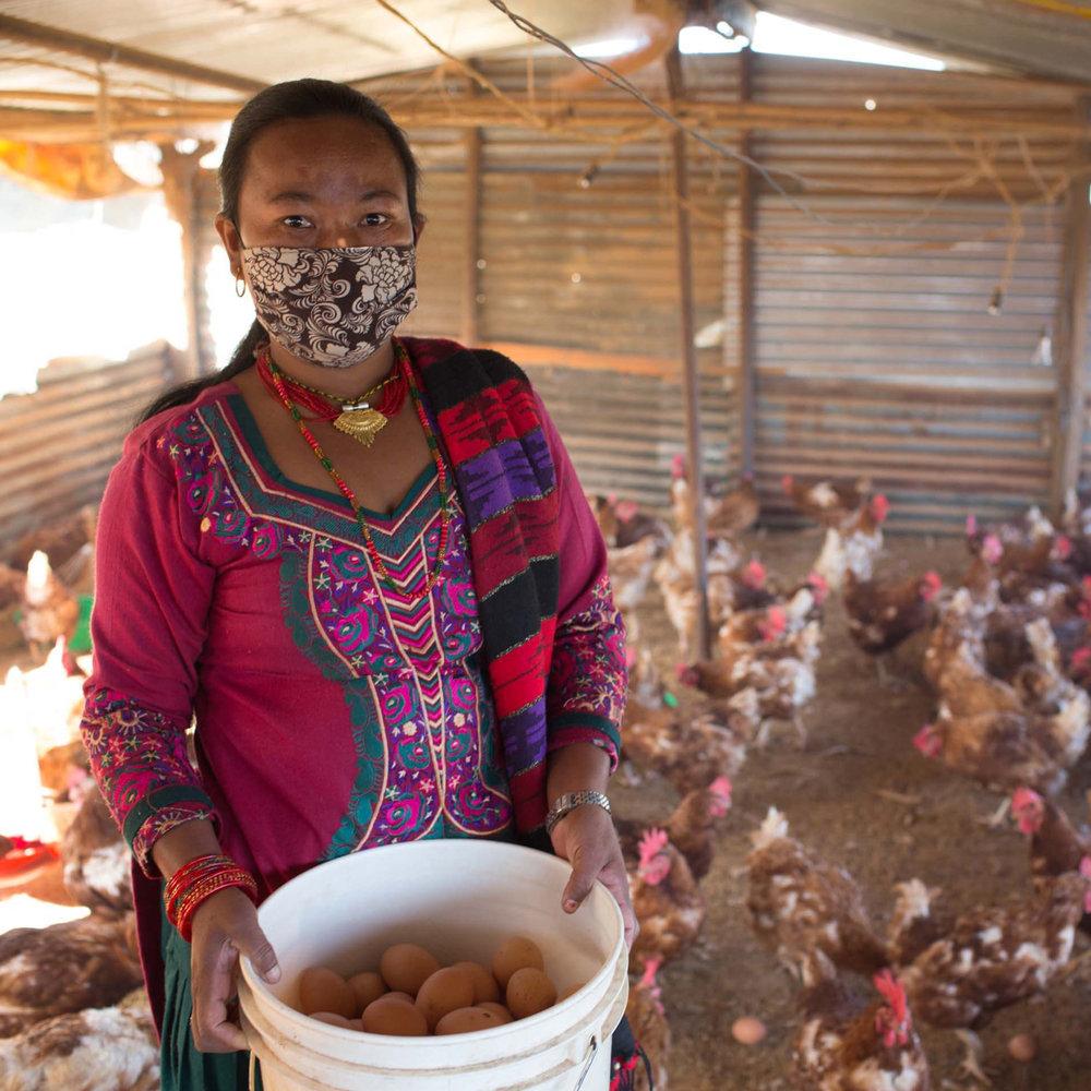 tiny Mun Maya poultry farming 2000x2000.jpg