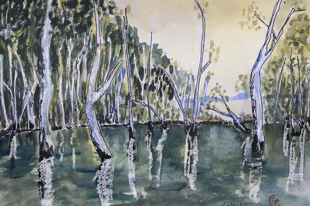 Swamp1