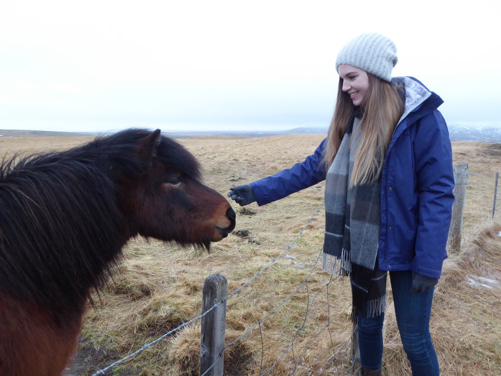 Getting close to an Icelandic horse