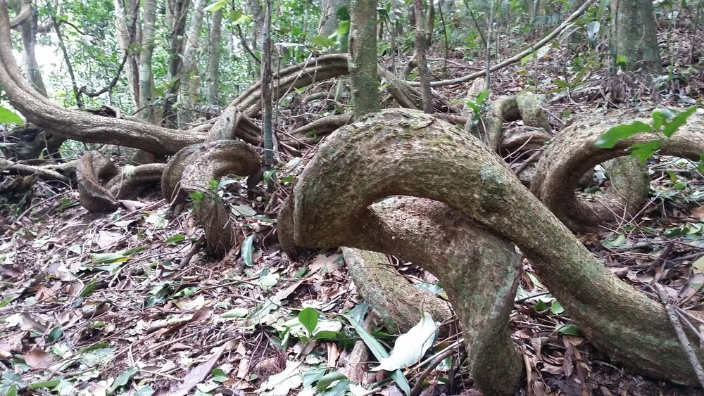 wilderness2.jpg