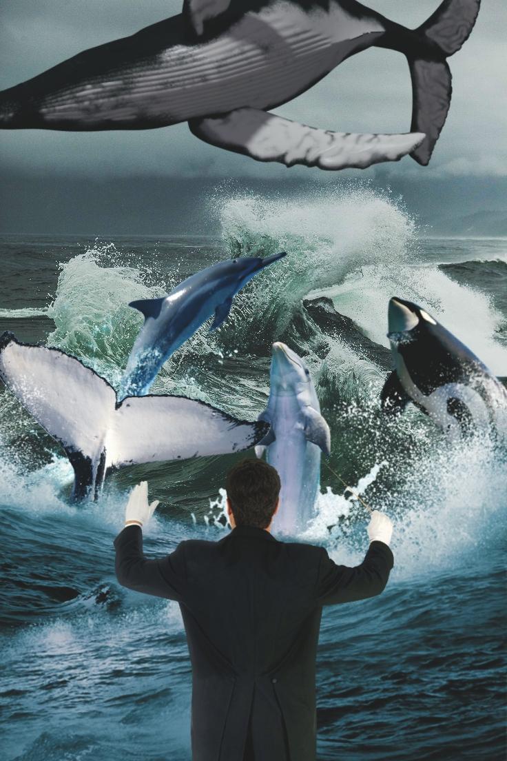whaleconductor.jpg