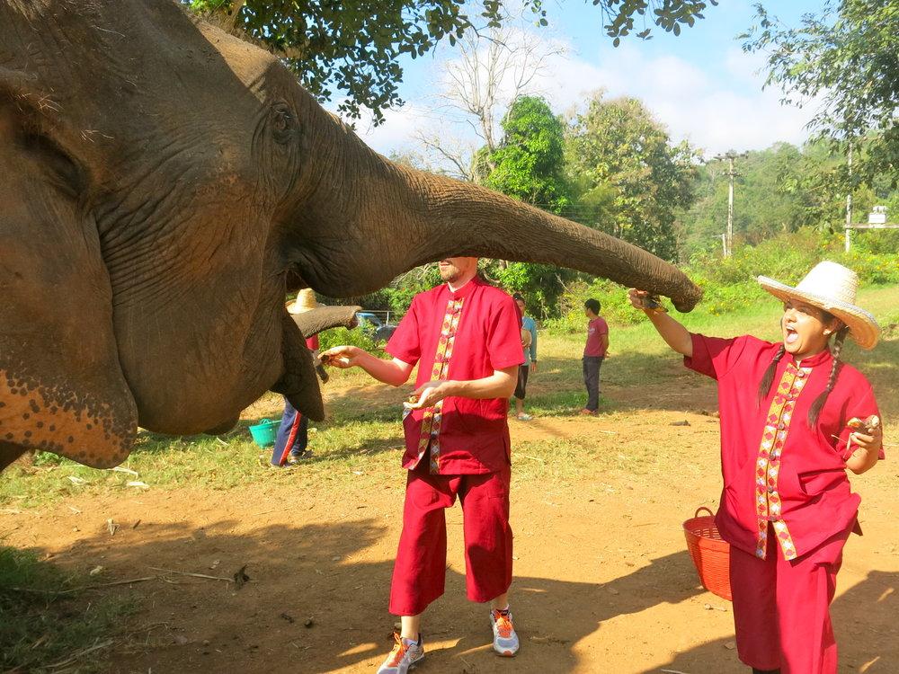 Feeding elephants with small bananas