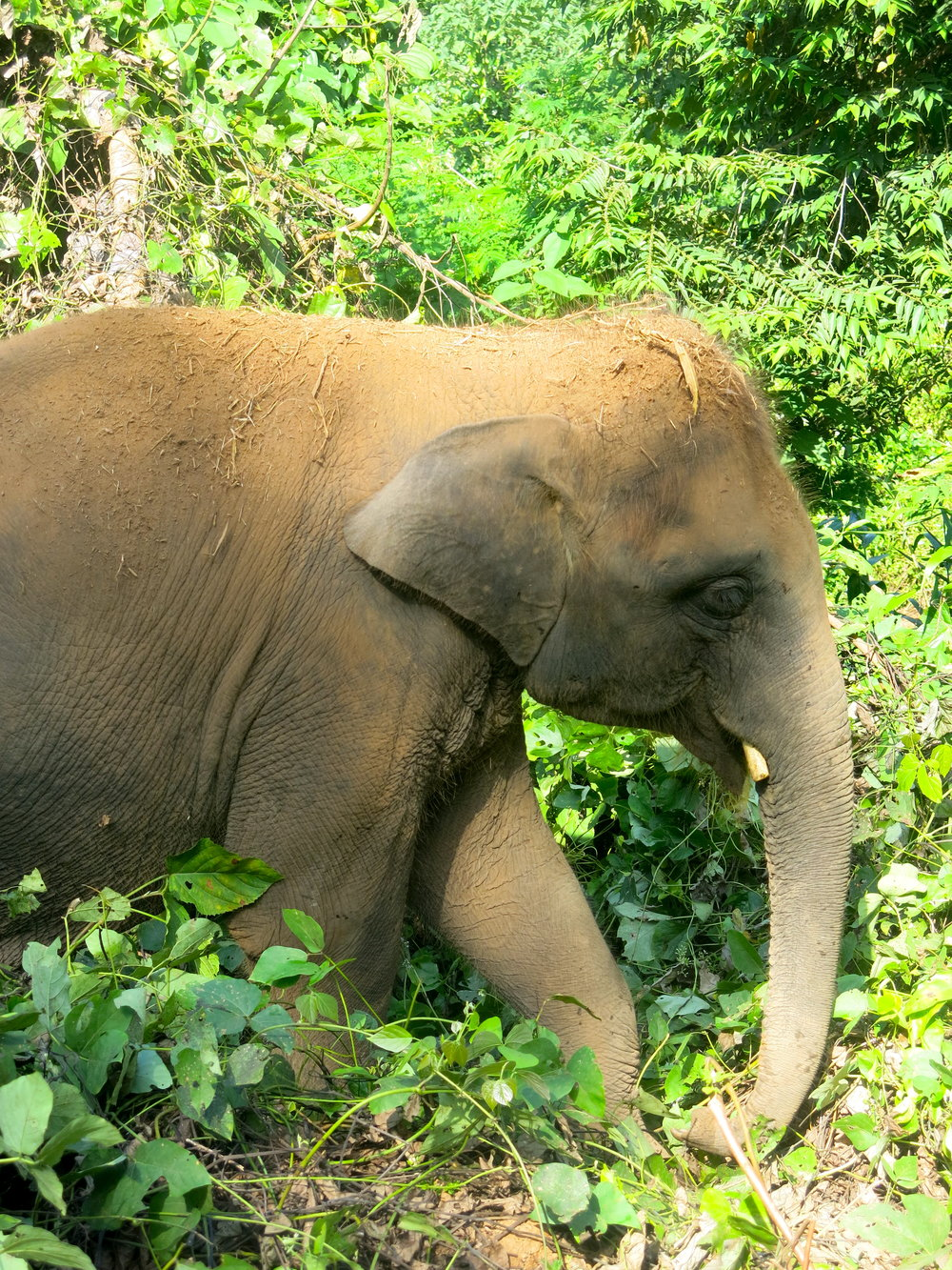 The 5 elephants were saved by the association from mistreatment