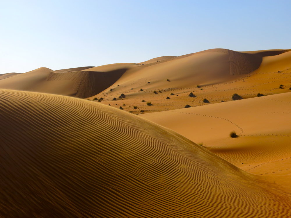 Alone on the red sand dunes of Wahiba Sands