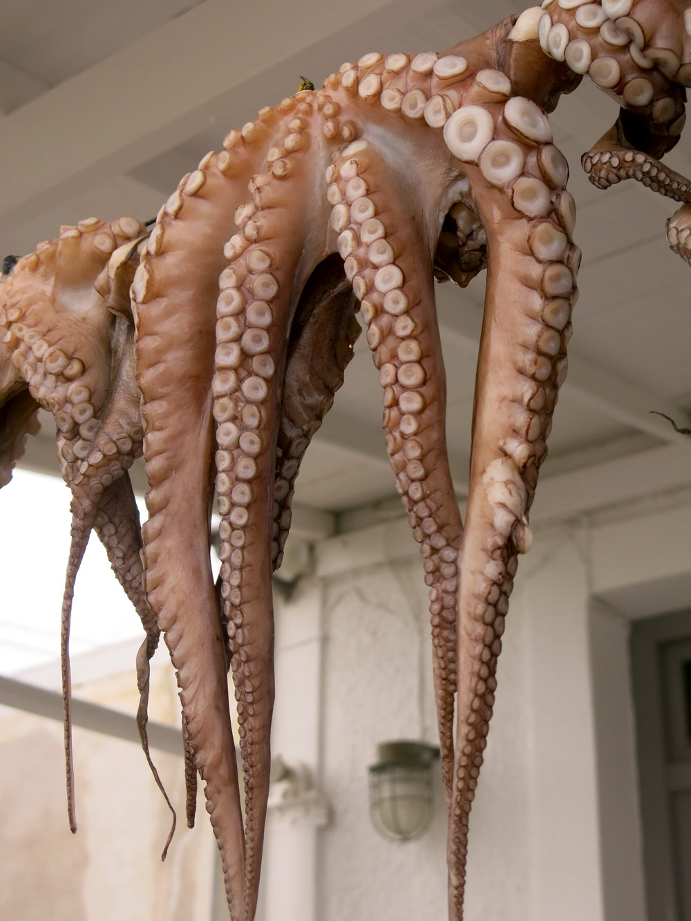 Octopus drying in the town of Parikia