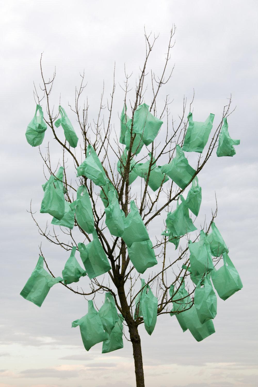 arbreplastic.jpg