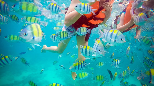 phiphi island fishes.jpg