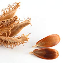 Fagus Sylvatica Extract    Estratto di gemme di faggio , agendo all'interno, hanno la capacità di stimolare il metabolismo cutaneo e l'aumento della riserva energetica intra cellulare.