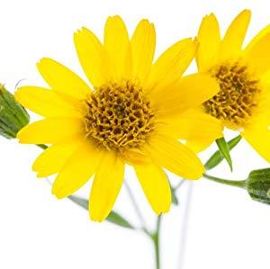 Arnica Montana Flower Extract   L'estratto di Arnica in dermo-cosmetico ha un azione stimolante e tonificante, snellente e defatigante.  A livello cutaneo ha proprietà antiecchimotica, revulsiva, iperemizzante, lenitiva e decongestionante.