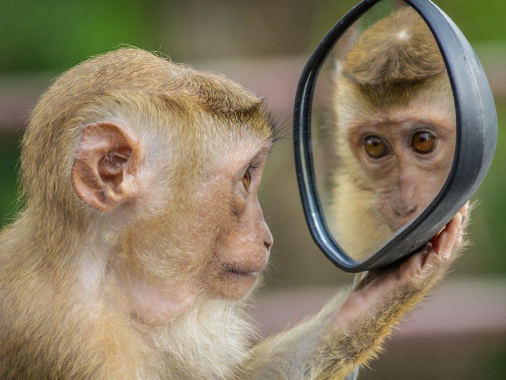 100% non testé sur les animaux - Tous les composants de nos produits ne sont pas testés sur les animaux: du produit fini aux matières premières.