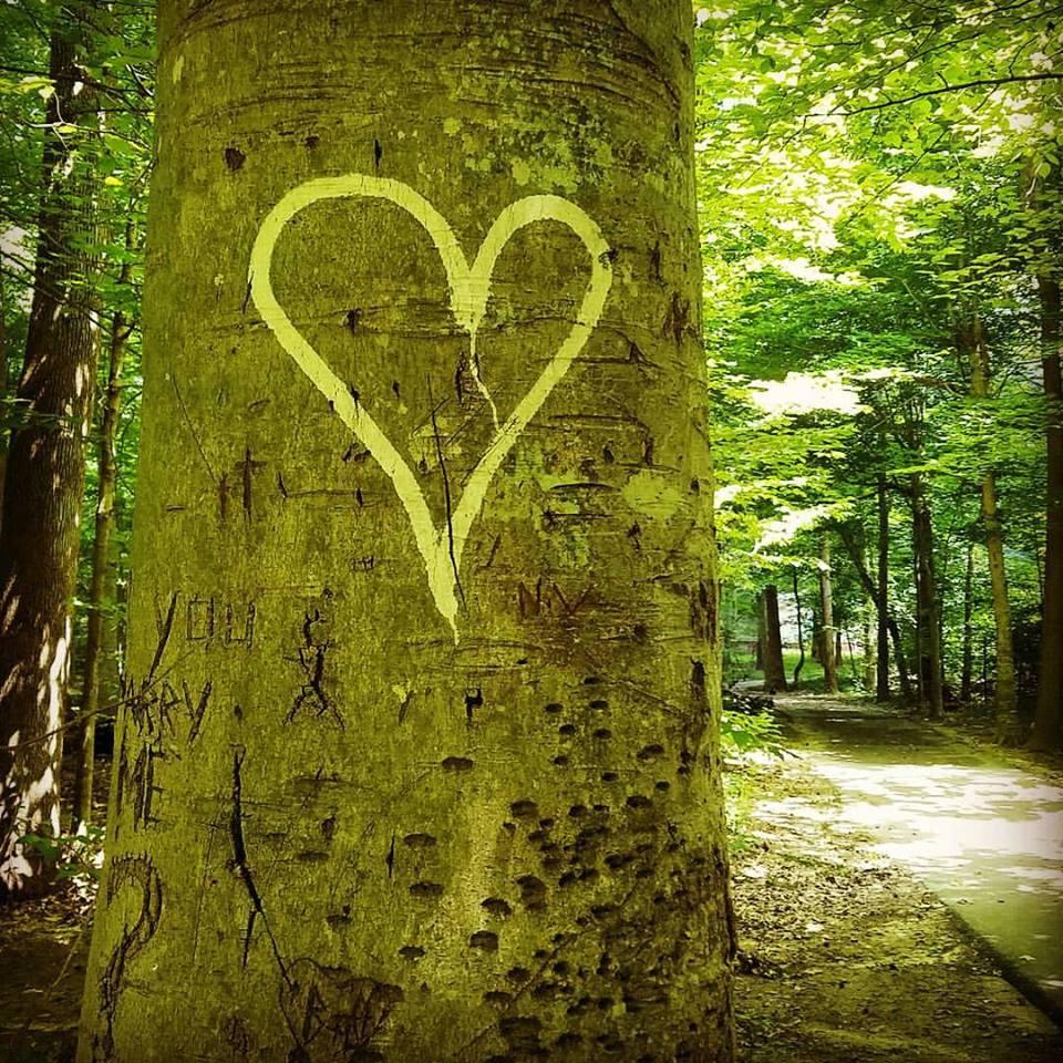 love_tree1.jpg